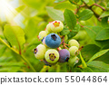 Organic blueberries on the ecological garden 55044864