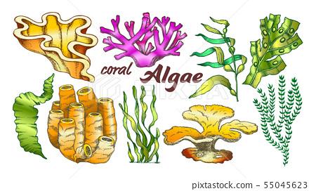 Collection Algae Seaweed Coral Set Vintage Vector 55045623