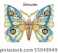 Peacock butterfly watercolor illustration 55049949