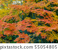 Autumn leaves and Takebayashi Nara Prefecture Nara Park 55054805