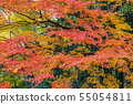 Autumn leaves and Takebayashi Nara Prefecture Nara Park 55054811
