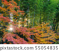 Autumn leaves and bamboo groves and sunrise sunrise Nara Prefecture Nara Park 55054835