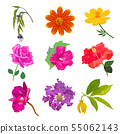 Colorful realistic flower isolated collection set 55062143