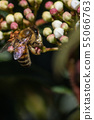 Pollination, the great work of the bees, they 55066763