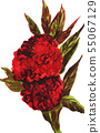 ดอกไม้,ธรรมชาติ,พื้นหลังสีขาว 55067129