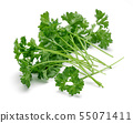Fresh green parsley isolated on white 55071411