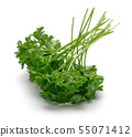 Fresh green parsley isolated on white 55071412