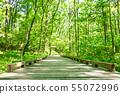 森林浴远足 55072996