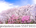 櫻桃樹 55073033