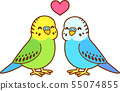 Cute cartoon budgie couple 55074855