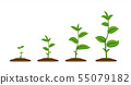 Realistic sprouts. Green plant stages of growth, agricultural plant seedling in ground. Vector young 55079182