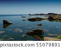 closeup of algae on rocks in border sea  55079891