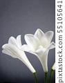 White lily Buddha flower 55105641