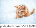 Little red kitten sitting on the snow in winter 55111699