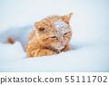 Little red kitten sitting on the snow in winter 55111702