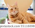 一隻貓 55116098