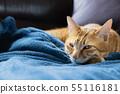 一只猫 55116181