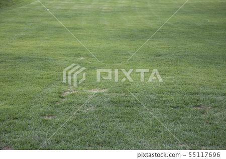 녹색의 잔디 55117696