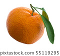 Tangerine or clementine with green leaf isolated on white background 55119295
