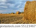 Harvested rye field 55123467
