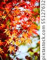 Autumn Japanese maple leaves background. 55127632