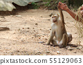 Asia cute monkey. 55129063