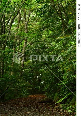 Forest road of Kinsakubara primeval forest 55131618