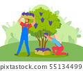 People Picking Grapes on Farm, Farming Garden 55134499