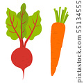 Beet Root and Carrot Vegetables. Vector Veggies 55134555