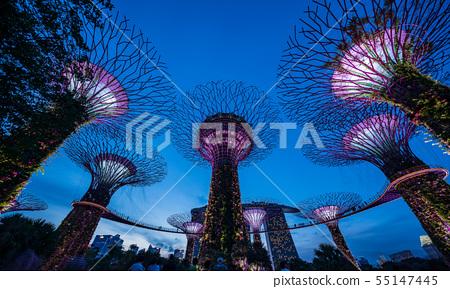 濱海灣花園樹叢夜景 55147445