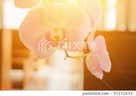 美麗的蘭花,種間的輻照度。 55151633