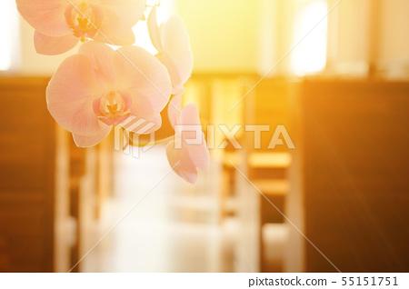 美麗的蘭花,種間的輻照度。 55151751