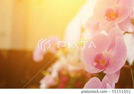 美麗的蘭花花特別鏡頭。種子存在於陽光明媚的掛繩中。 55151852