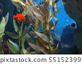 Tropical red mammon fish 55152399