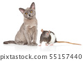 Cat and Rat together 55157440