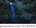[Japanese summer features] wild dance of Genji firefly 55160405