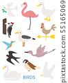 다양한 조류의 일러스트 세트 variety of vector birds set 55165069