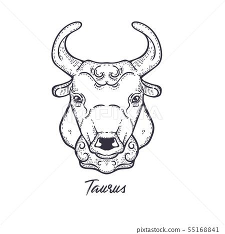 Taurus Zodiac constellation. The symbol of the astrological horoscope. 55168841