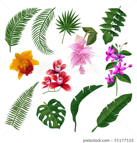 Set of Tropical flowers bouquet. Vector illustration of leaves and branches 55177528