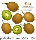 kiwi vector set 55178152