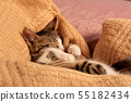 Cute little cat sleeping in the bed on a blanket 55182434