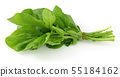 Bunch of fresh rucola isolated on white 55184162
