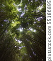 Bamboo grove 55186895