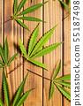 Marijuana cannabis leaves. 55187498