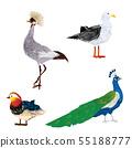Vector birds set 55188777