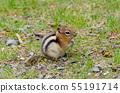 Chipmunk (Canada) 55191714