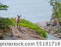 절벽에 서서 빅혼 어린이 (캐나다) 55191716