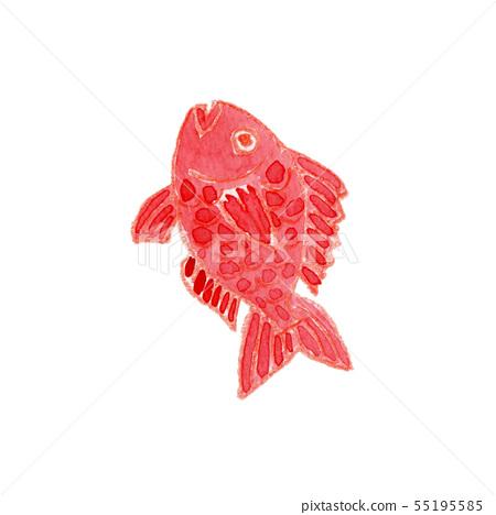 Sea bream watercolor 55195585