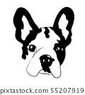 French bulldog puppy illustration 55207919