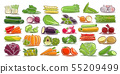 Vector set of fresh Vegetables 55209499